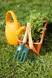 Gardening tools with watering can and a box of seedling Royalty Free Stock Images
