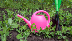 Gardening tools, watering can, plants and soil Stock Photos