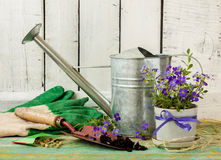 Gardening tools on white wood background - spring. Gardening tools: watering can, flowers, gloves, spade, soil and seeds on white wood background. Spring in the Stock Photo