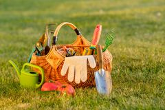 Gardening tools in basket and watering can on grass. Freshly harvested tomatoes, organic food concept. Royalty Free Stock Photos