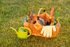 Gardening tools in basket and watering can on grass. Gardening tools in wicker basket and watering can on grass Royalty Free Stock Photo