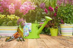 Gardening tools on wood table in the garden Royalty Free Stock Image