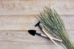 Gardening tools on wooden background Royalty Free Stock Images