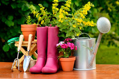 Gardening tools on wooden table and green background.  Royalty Free Stock Image