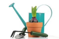 Gardening tools and young hyacinth Stock Photo