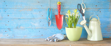 Gardening tools and young hyacinth flower. Royalty Free Stock Images