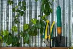 Green plants in a greenhouse. royalty free stock photos