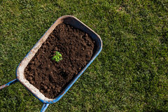 Gardening trolley full of soil and a plant Royalty Free Stock Photography