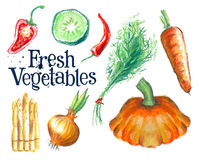Gardening vector logo design template.  fresh food Royalty Free Stock Photography