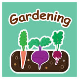 Gardening with vegetables Stock Image