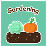 Gardening with vegetables Stock Photo