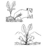 Gardening vintage illustration, sowing plants Royalty Free Stock Photo