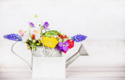 Gardening watering can with garden flowers and greeting card on white wooden background Stock Photo