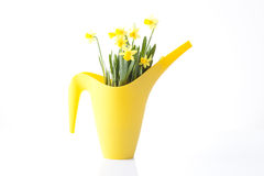 Gardening, watering can with spring flowers Royalty Free Stock Photo