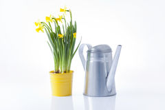 Gardening, watering can and spring flowers Royalty Free Stock Photos