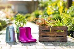 Gardening. Watering can and wellies and in garden Stock Image