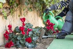 Gardening, Stock Image