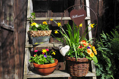 Gardening Welcome flower Stock Images