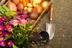 Free Gardening With Home Grown Organic Vegetables And Flowers Royalty Free Stock Photos - 155615588