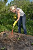 Gardening woman Stock Image