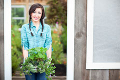 Gardening woman Stock Images