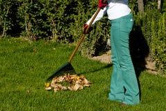 Gardening. Woman gardening for autumn and winter seasons Stock Photos