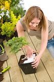 Gardening - woman with bonsai tree and plants Stock Images