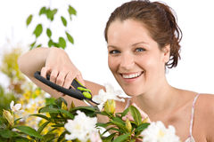 Gardening - woman cutting flower with shears Stock Images