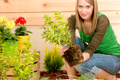 Gardening woman planting potted green spring stock images