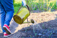 Gardening Royalty Free Stock Image