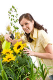 Gardening - woman sprinkling water on sunflower Royalty Free Stock Photo