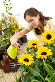 Gardening - woman sprinkling water on sunflower Stock Photos