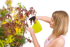 Gardening - woman sprinkling water to plant Royalty Free Stock Photos