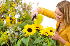 Gardening - woman sprinkling water to sunflowers Royalty Free Stock Image