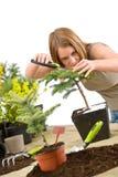 Gardening - woman trimming bonsai tree Royalty Free Stock Photos