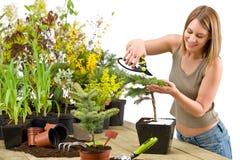 Gardening - woman trimming bonsai tree Stock Image