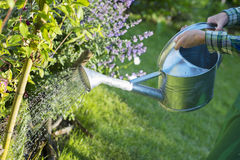 Gardening woman watering the flowers in garden Royalty Free Stock Photo