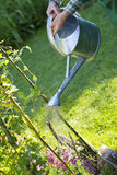 Gardening woman watering the flowers in garden Royalty Free Stock Image