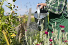 Gardening woman watering the flowers in garden Stock Photography