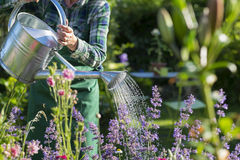 Gardening woman watering the flowers in garden Stock Photos