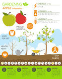 Gardening work, farming infographic. Apple. Graphic template. Fl Stock Images