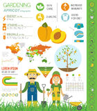 Gardening work, farming infographic. Apricot. Graphic template. Stock Photography