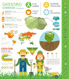 Gardening work, farming infographic. Cabbage. Graphic template. Royalty Free Stock Photography