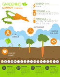 Gardening work, farming infographic. Carrot. Graphic template. F Stock Photo