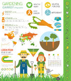 Gardening work, farming infographic. Carrot. Graphic template. F Royalty Free Stock Photo
