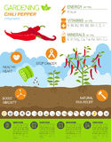 Gardening work, farming infographic.Chili pepper. Graphic templa Royalty Free Stock Image