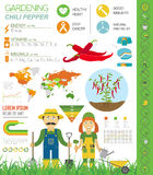 Gardening work, farming infographic.Chili pepper. Graphic templa Stock Images