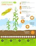 Gardening work, farming infographic. Corn. Graphic template. Fla Stock Photos