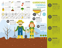 Gardening work, farming infographic. Graphic template. Flat styl Stock Image
