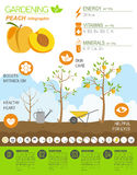 Gardening work, farming infographic. Peach. Graphic template. Fl Royalty Free Stock Image